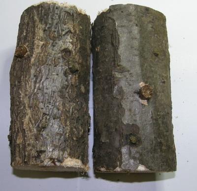 うさぎのかじり木天然木