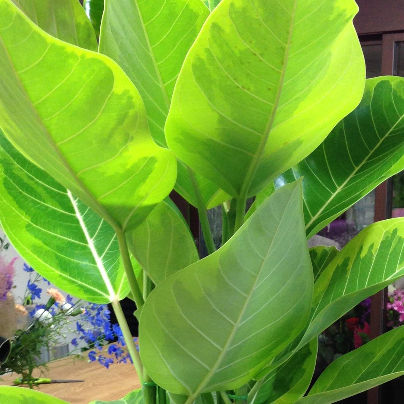 事務所開設御祝、事務所移転御祝に贈る観葉植物