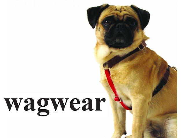 【残り3点】-メール便OK- 4ヶ所で長さ調節可能 Contrast Nylon Harness (コントラスト ハーネス) S /M /L Wagwear [Made in USA]