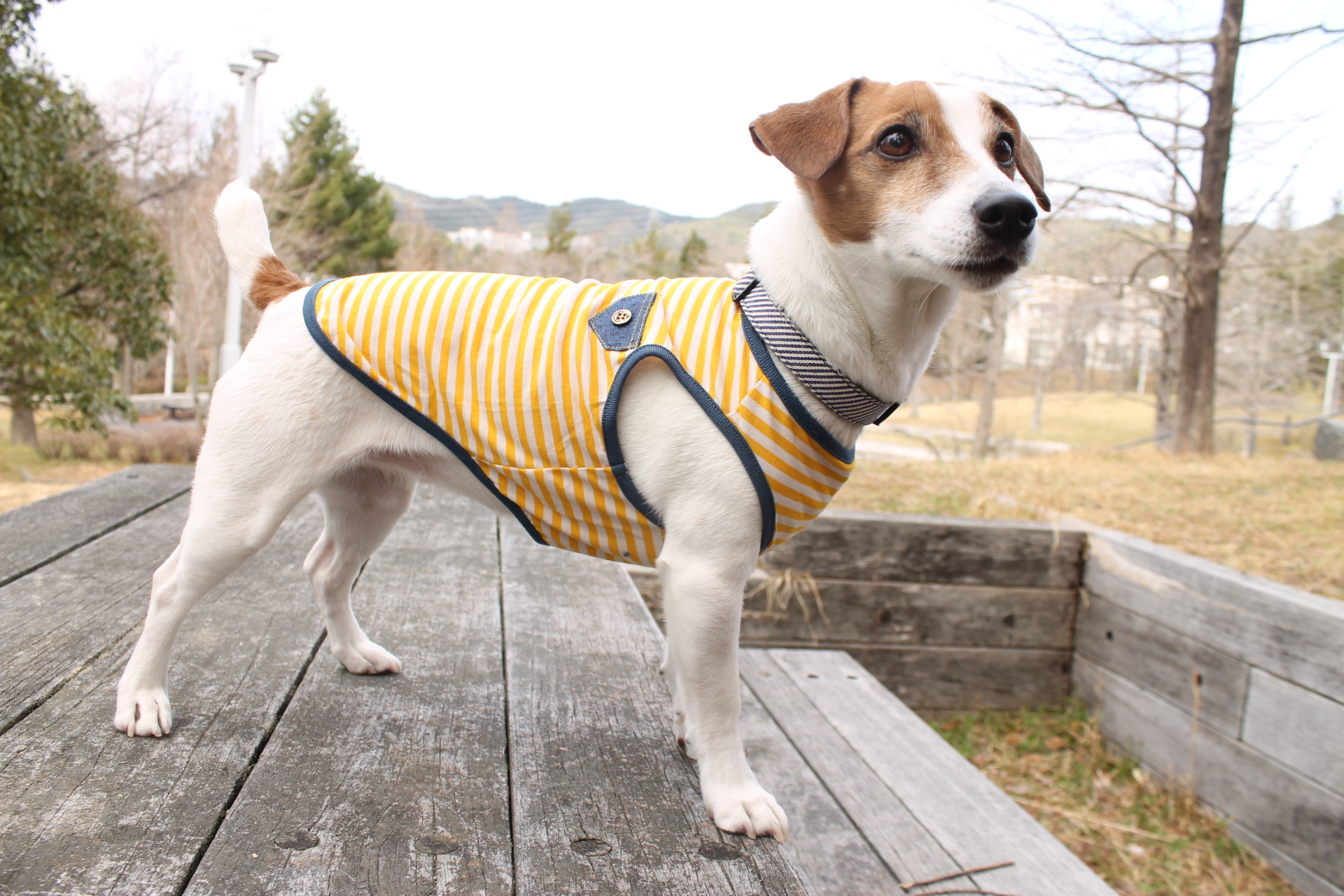 <犬と生活>クール生地なのに綿素材!クールボーダータンク