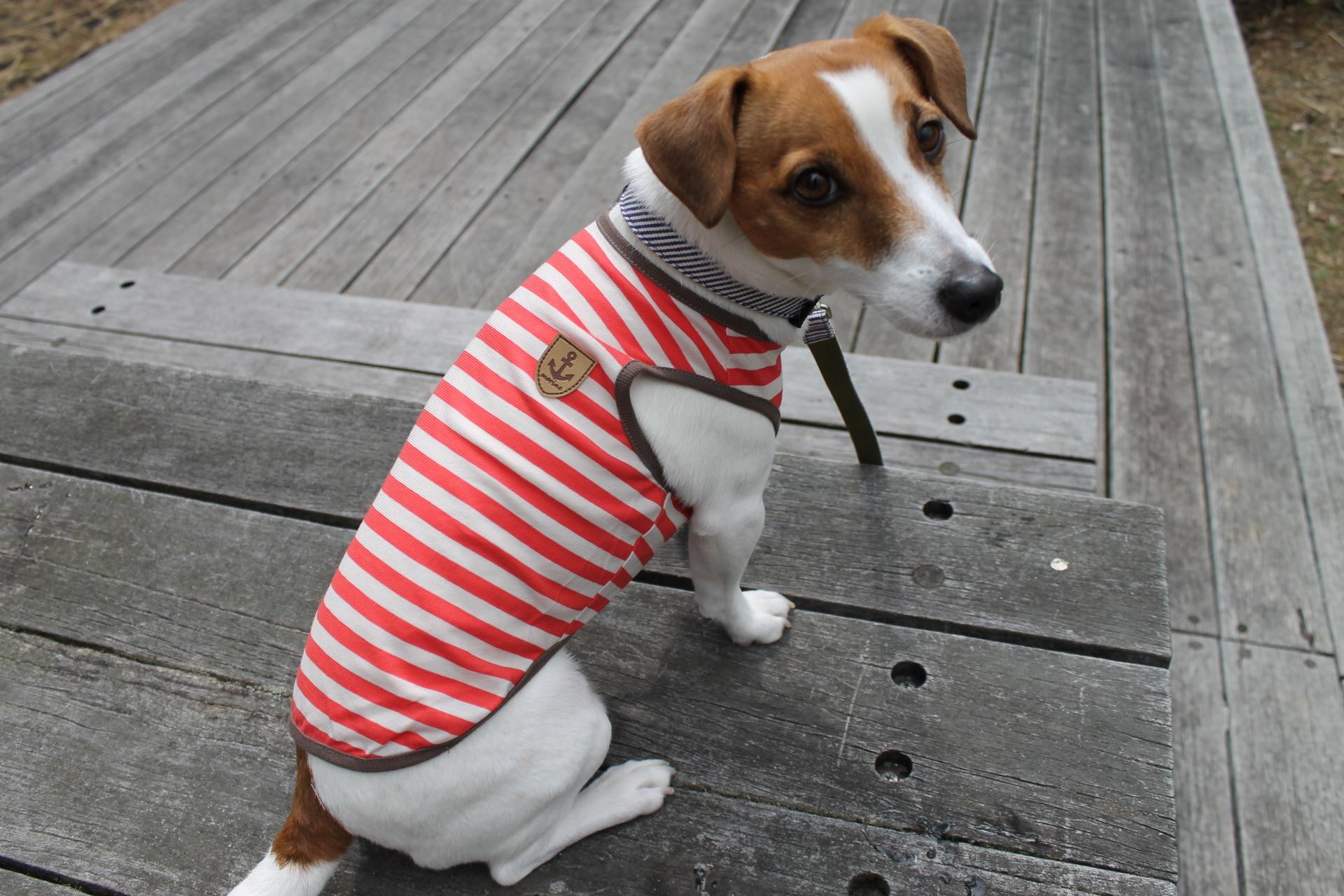 <犬と生活>綿100%なのに触れるとヒンヤリ クールタンクボーダー 5号