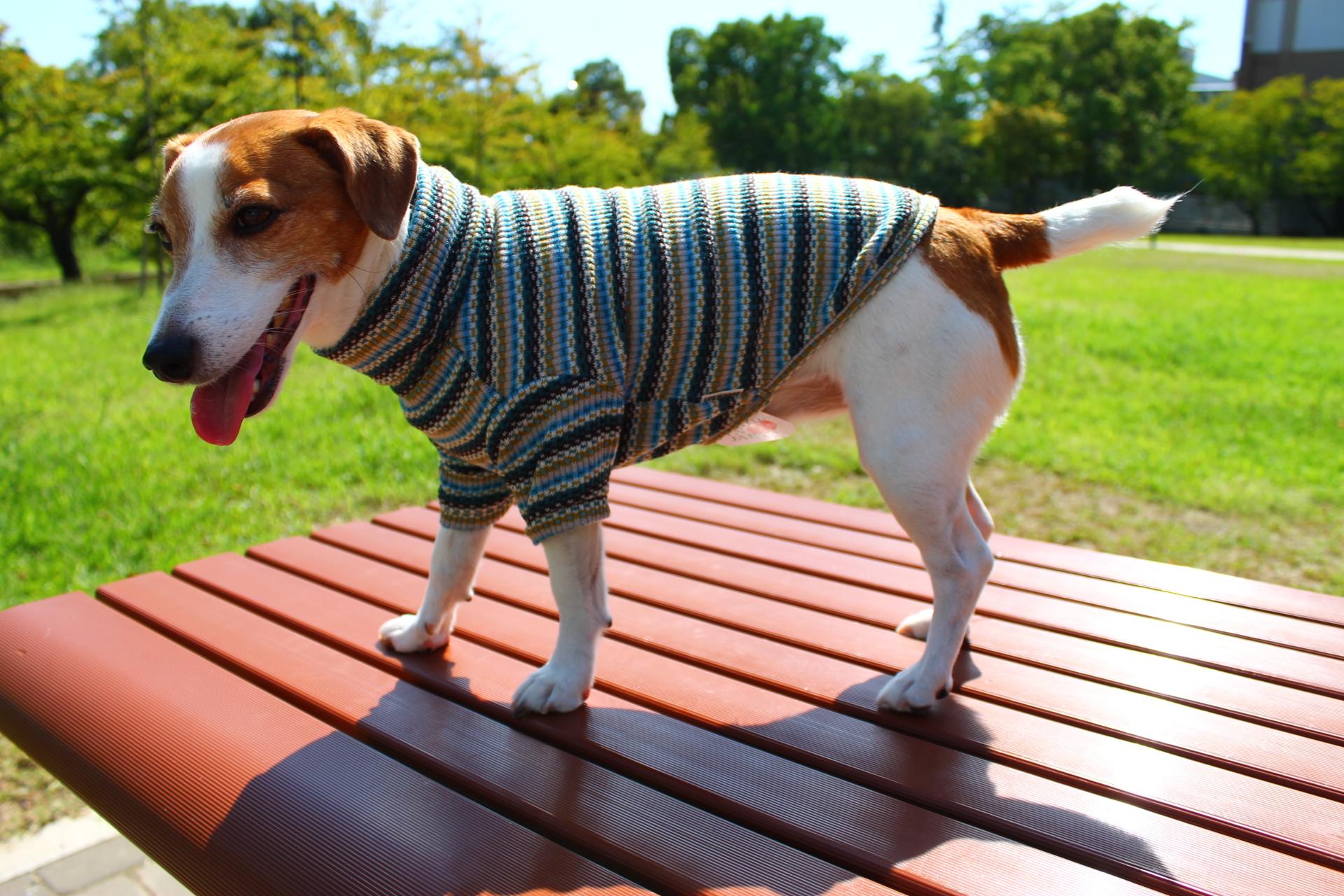 <犬と生活>シックなマルチカラーがカラフル 2019AWマルチボーダータートル 4号