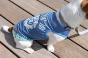 <犬と生活>70%OFF!ひんやり冷たさを感じる重ね着風タンク☆クールタンク(吸水・速乾・冷感生地使用) 4号