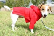 <犬と生活>フードのポンポンが可愛い!2018AW 編み立てニットパーカー 4号