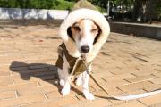 <犬と生活>ボリューミーなボア!しっとり生地のこだわりモッズコート 4号