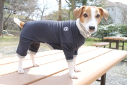 <犬と生活>安全な素材で防虫対策 バグガードスーツ 4号