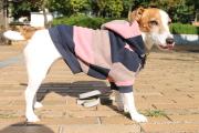 <犬と生活>太目のボーダーが目を惹くカラフルボーダーパーカー 4号