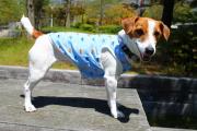 <犬と生活>かわいいクジラの刺繍がいっぱい クールくじらタンク 4号