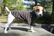 <犬と生活>発熱保温繊維で作られたウォームマルチボーダーTシャツ 4号