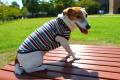 <犬と生活>薄くて暖かくて着せやすい ウォームマルチベスト 5号