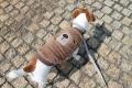 <犬と生活>後ろ姿がとってもキュート ボアフリースクマさん