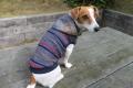 <犬と生活>フードにプリントが施された ネップボーダーパーカー 5号(無料お名前刺繍入れ可)