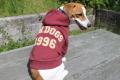 <犬と生活>20%OFF!モコモコロゴ入りカレッジパーカー 5号