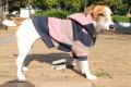 <犬と生活>太目のボーダーが目を惹くカラフルボーダーパーカー 5号