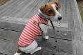 <犬と生活>綿100%なのに触れるとヒンヤリ クールタンクボーダー