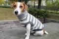 <犬と生活>柔らかなタートルネックのフリースボーダー 5号