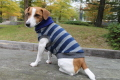 <犬と生活>柔らかなタートルネックのフリースボーダー 5号(無料お名前刺繍入れ可)