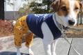 <犬と生活>50%OFF!イカリマークがいっぱい!マリンパンツ 4号