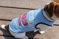 <犬と生活>70%OFF!真夏にオススメ!クールメッシュタンク~吸水・速乾生地使用~ 5号