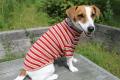 <犬と生活>発熱保温繊維で作られたウォームマルチボーダーTシャツ 5号(無料お名前刺繍入れ可)