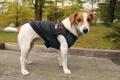 <犬と生活>MA−1風デザインがカッコよくて暖かい!ウォームMA-1パーカー 5号