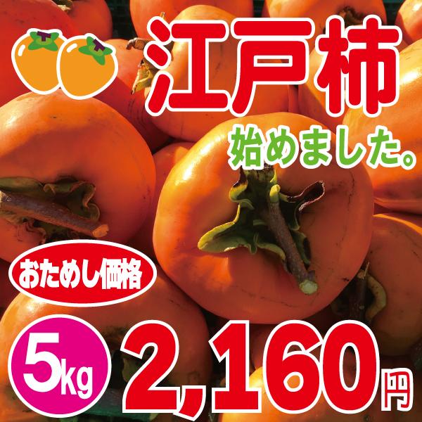 江戸柿5kg