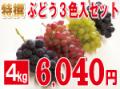 ぶどう3色入セット4kg 【発送期間】9月上旬〜10月上旬ごろ