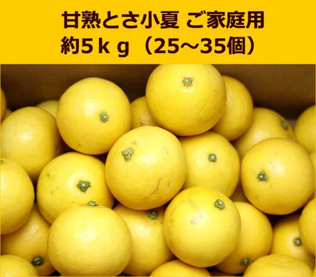 甘熟土佐小夏家庭用5kg