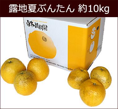 露地夏ぶんたんご家庭用 約10kg