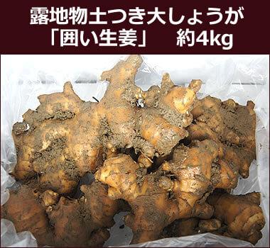 露地物土つき大しょうが(囲い生姜) 約4kg
