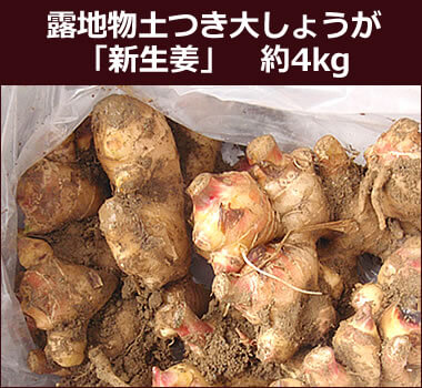 露地物土つき大しょうが(新生姜) 約4kg