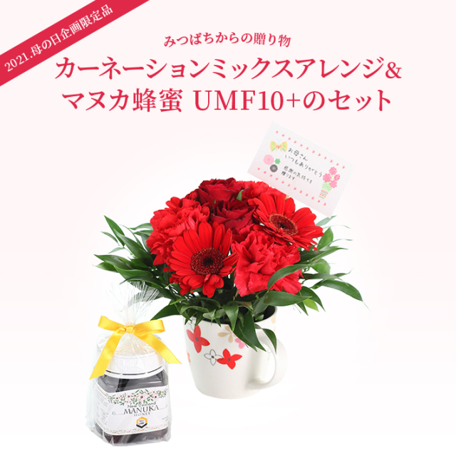 母の日ギフト 生花アレンジUMFマヌカス10+