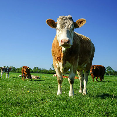 f_アルゼンチン牧草地イメージ