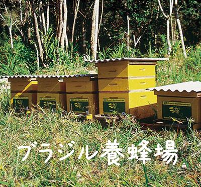 ブラジル養蜂場と巣箱