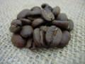 ストレート珈琲豆 トラジャカロシ
