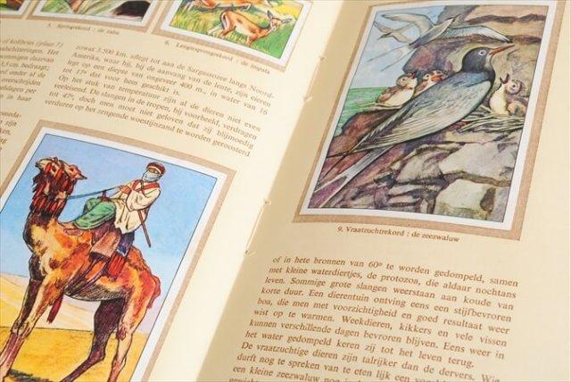 1950年代 ヴィンテージ ネスレ NESTLE ノベルティカード コレクション 冊子 アンティーク 洋書 古書