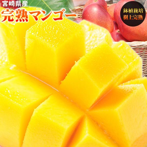 宮崎 完熟 マンゴー 品種