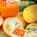 送料無料 特別セット【春の柑橘福袋(きんかん1kg+日向夏3kg)】 まるかじり完熟きんかん1kgと、高級柑橘日向夏3kgのスペシャルセット!