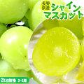 【長野県産 ぶどう シャインマスカット 2kg前後 3~5房】種無し 送料無料 マスカット