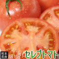 塩 トマト 糖度8度以上 送料無料 熊本県八代産【セレブトマト 秀 11-16玉】完熟 塩トマト の濃厚な甘みと凝縮された旨みは、まさにセレブ。マヨネーズも、塩も、要りません! とまと [※常温便][※他商品との同梱不可]