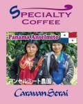 パナマコーヒー アンセルミート農園コーヒー豆入荷