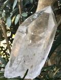 バイア産レムリアンシード (ファントム) LEM108