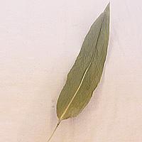 乾燥笹葉 50枚入(井草付き)