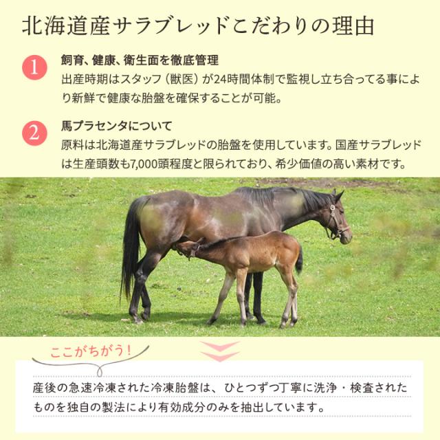 北海道産サラブレッド