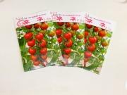 協和_水耕栽培用,ミニトマト種ネネ,水耕栽培装置ホームハイポニカでの栽培に適しています。