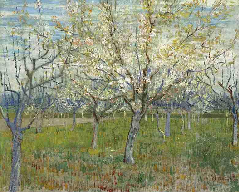 花咲くアンズの木々のある果樹園