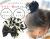 親子お揃いシュシュ(ペアヘアアクセサリー)専門店ジュメル黒ドットと黒リボンガールズシュシュ【出産祝い/誕生日/子ども】メイン1