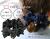 【親子お揃いプレゼント】ブラックレースと黒ドットリボンのママシュシュ【出産祝い/ペア/誕生日/ジュメル神戸】メイン