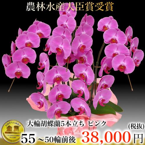 5本立ち大輪胡蝶蘭50輪ピンク