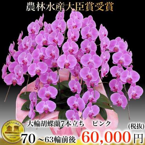 7本立ち大輪胡蝶蘭63輪ピンク
